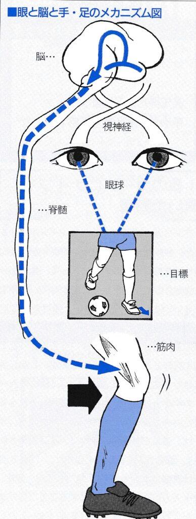スポーツは見る力、眼の機能がパフォーマンスを左右する