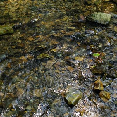 偏光レンズで川底を見るとスッキリした見え方になります