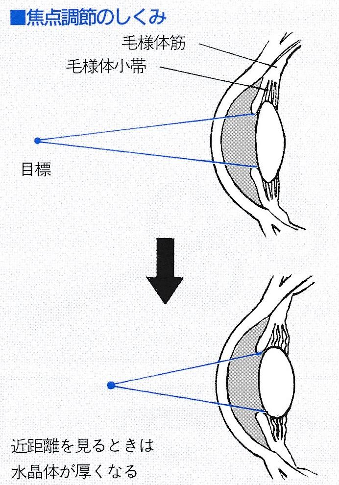 眼の水晶体の調節力がスポーツのパフォーマンスを変える